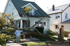 损坏的房子结构树 库存图片