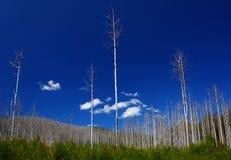损坏的火s结构树维多利亚 库存照片