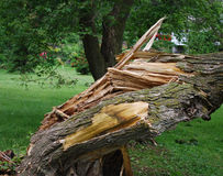 损坏的结构树 免版税库存图片