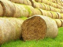 损坏的腐烂的麦子秸杆捆绑,在绿色领域 免版税库存图片
