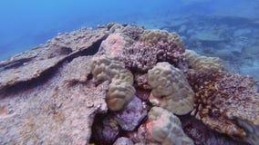 损坏的表珊瑚 股票视频