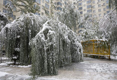 损坏的雪结构树 库存图片