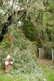 损坏飓风whippany艾琳的nj 免版税库存照片