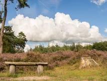 换下场在与剧烈的云彩的欧石南丛生的荒野在天空 免版税库存图片