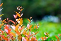 更换颜色叶子 免版税图库摄影