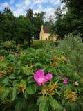 捷克共和国桃红色花在城堡庭院里 库存照片