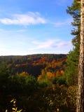 捷克共和国的森林 库存照片