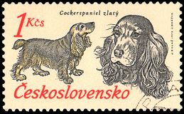 捷克斯洛伐克-大约1973年:邮票,打印在捷克斯洛伐克,显示一只金黄猎犬 免版税库存照片