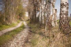 捷克森林风景葡萄酒照片 库存照片