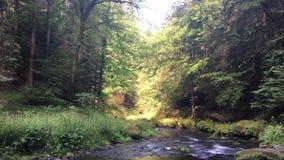 捷克瑞士国立公园、大岩石和河 股票视频