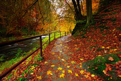 捷克秋天风景用桔子和黄色在水,黑暗的森林, Kamenice河中在背景中离开,捷克nationa的 库存照片