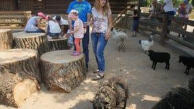 捷克,布拉格16, 2017年6月:与动物的儿童游戏在动物园里 影视素材