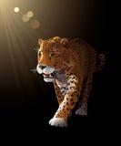 捷豹汽车在黑暗,月光-传染媒介中 免版税图库摄影