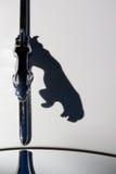 捷豹汽车的猫影子 免版税图库摄影