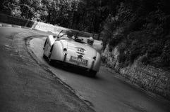 捷豹汽车XK 120 OTS跑车1954年 图库摄影