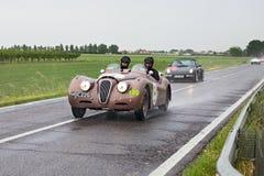 捷豹汽车XK 120 OTS (1950)在集会Mille Miglia 2013年 库存图片