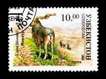 捻角山羊(山羊属falconeri), WWF, Makhor serie,大约1995年 库存图片