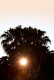 掌上型计算机剪影日落结构树 库存图片