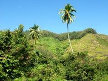 掌上型计算机塔希提岛结构树 免版税库存图片