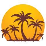 掌上型计算机夏天日落结构树 免版税库存照片