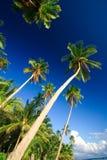 掌上型计算机热带天堂的结构树 免版税图库摄影