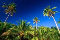 掌上型计算机热带天堂的结构树 库存照片
