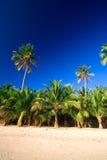 掌上型计算机热带天堂的结构树 免版税库存图片