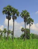 掌上型计算机糖泰国结构树 库存照片