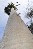 掌上型计算机高大的树木树干 库存照片