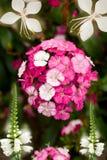 排列五颜六色的花 库存图片