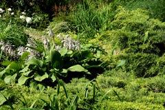 排列庭园花木 库存图片