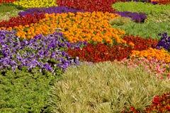 排列庭院盆的苗圃植物 库存照片
