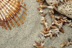 排列海滩 免版税图库摄影