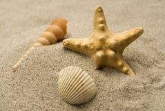 排列海滩 库存图片
