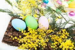 排列用复活节彩蛋和含羞草 免版税库存照片