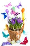 排列番红花复活节 免版税库存照片