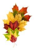排列秋天五颜六色的叶子 免版税库存照片