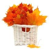 排列秋天五颜六色的叶子 库存图片