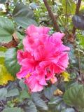 排列美好的花粉红色 库存照片