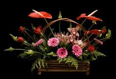 排列被分类的花卉花 库存照片