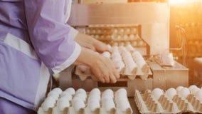 排序和拣掉在家禽场的鸡鸡蛋的过程,日落,工作者 免版税库存照片