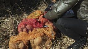 排序在草的妇女土豆野生生物动物饲养的 股票录像