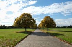 排行公园道路的秋天树 免版税库存图片