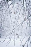 排行冬天 免版税图库摄影