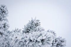 排行冬天 免版税库存照片