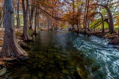 排行瓜达卢佩河的美丽如画的塞浦路斯结构树。 免版税库存照片