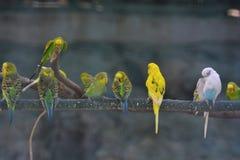 排队的爱鸟 免版税图库摄影