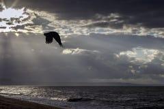 掠夺在海侏罗纪海岸,多西特,英国 库存照片