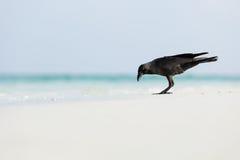 掠夺宏观照片在海滩的 库存照片