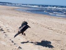 掠夺海边 图库摄影
